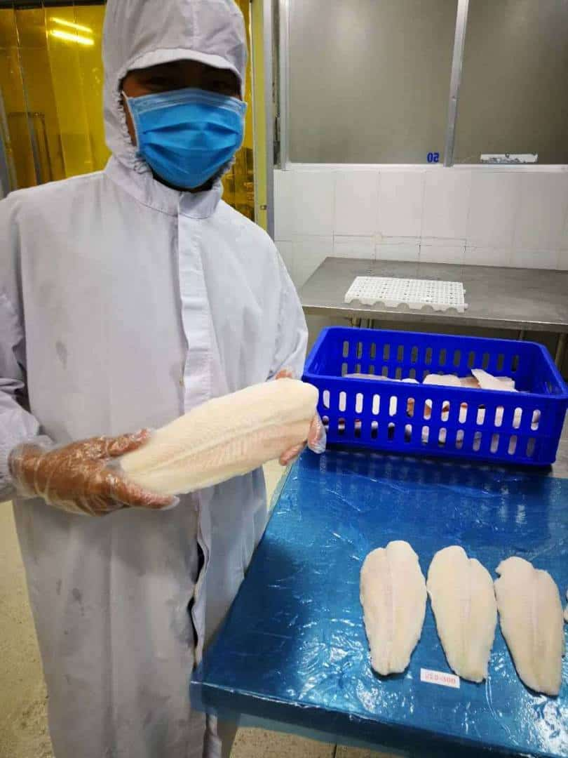 dory fish quality inspection